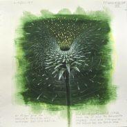 Ausstellung Echinacea-Projekt