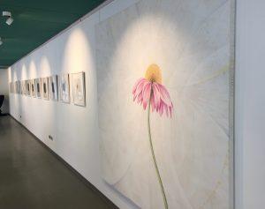 Galerie Wandseite: 24 Bilder Echinacea-Werkgruppe, Foto: KUNST KLOSTER