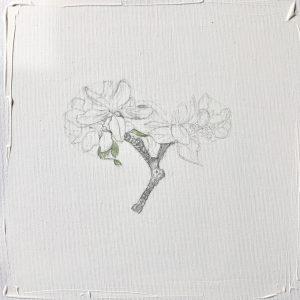 """""""work in progress""""  Natur Ikone Apfelblüten Zweig, Bleistift auf Leinwand, 30 x 30 cm, 2019"""