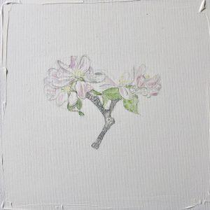 """""""work in progress"""" 3 Natur Ikone Apfelblüten Zweig, Bleistift und Aquarell auf Leinwand, 30 x 30 cm,"""