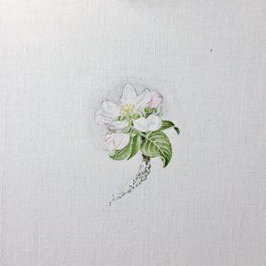 """""""work in progress"""" 3 Natur Ikone Apfelblüten Zweig, Öl auf Leinwand, 30 x 30 cm, 2019"""