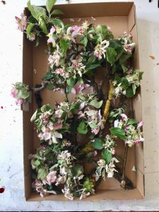 Dankes-Ritual, Tischinstallation, Apfel-Blüten-Arbeitsplatz, 2019