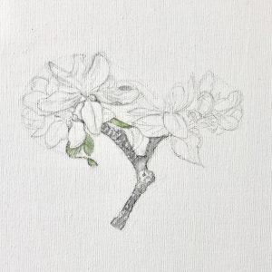 """""""work in progress"""" 2 Natur Ikone Apfelblüten Zweig, Bleistift und Aquarell auf Leinwand, 30 x 30 cm,"""