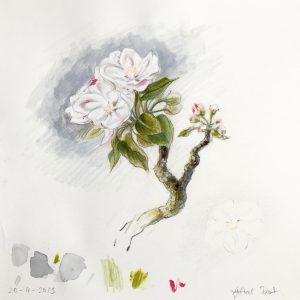 Projekt Apfel-Blüten-Ernte