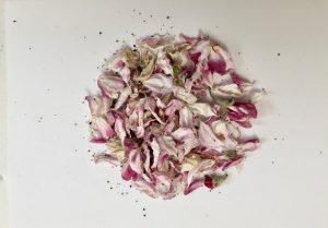 Apfel-Blüten-Kreis, Naturmaterial Apfelblüten auf grundierter Leinwand angeordnet, 2019